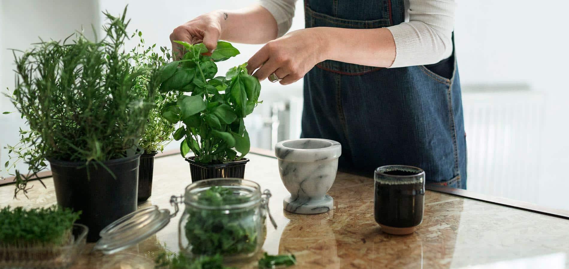 pendant l 39 hiver faites pousser vos herbes aromatiques en. Black Bedroom Furniture Sets. Home Design Ideas